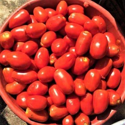 doğal salçalık domates