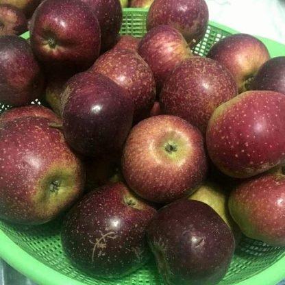 tatlı mayhoş elma