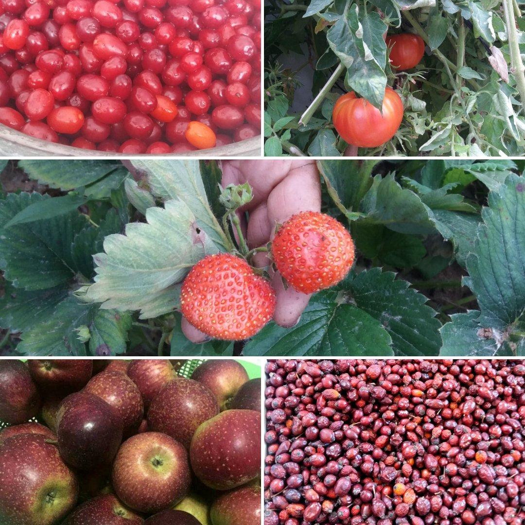 Kırmızı Meyveler ve Sebzeler